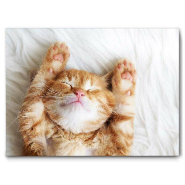 Schallschlucker Akustikbild Katze