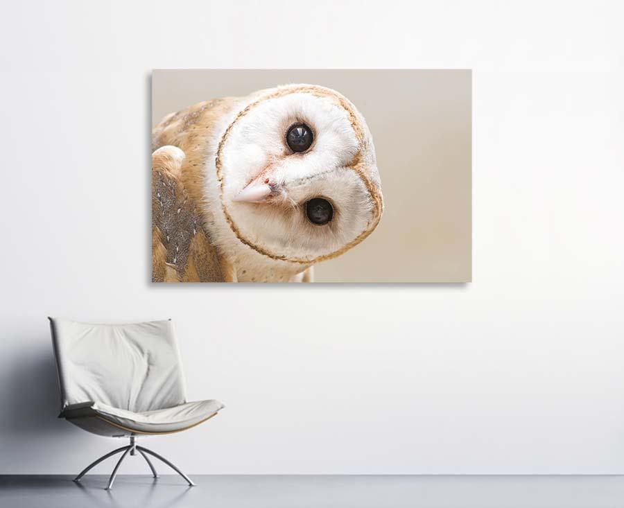 Akustikbilder mit Motiven von Tieren