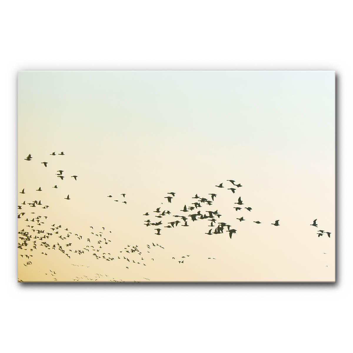 Akustikbild Vogelschwarm im Format DIN A0