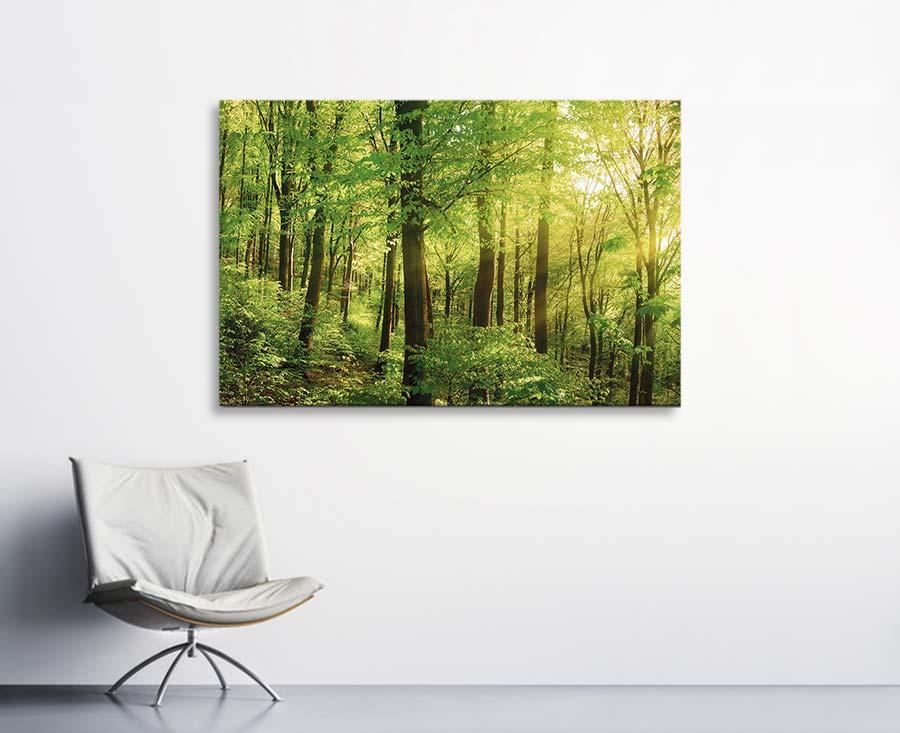 Akustikbilder mit Motiven von Bäumen und Wäldern