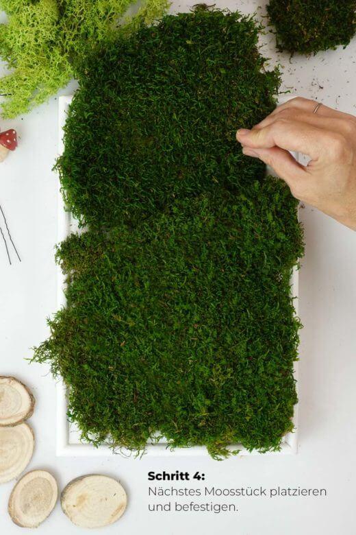 Moosbild DIY Schritt 4: weitere Moosstücke befestigen