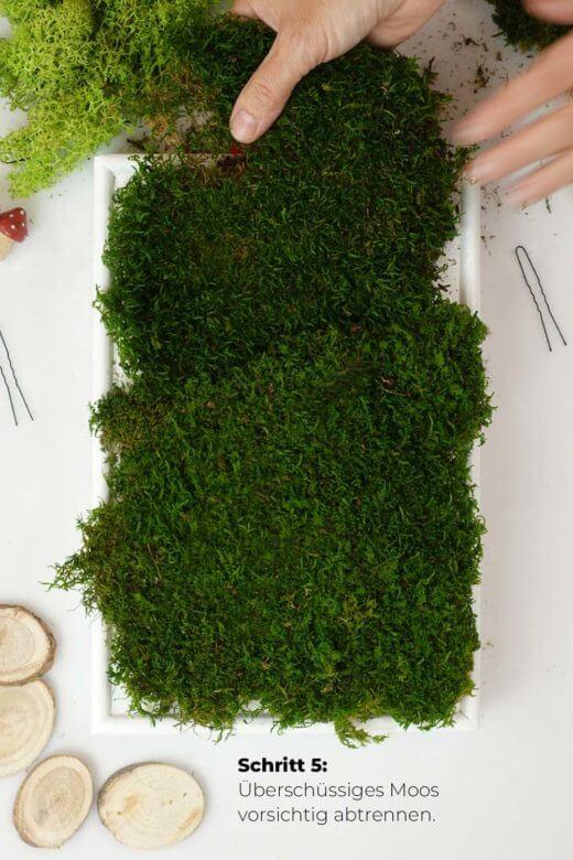 Moosbild DIY Schritt 5: überschüssiges Moos entfernen