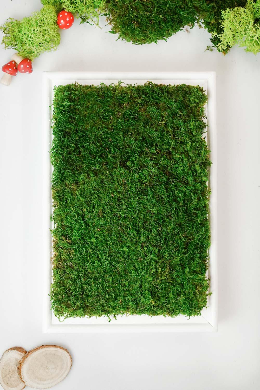 Moosbild DIY als Vertical Garden in 7 Schritten