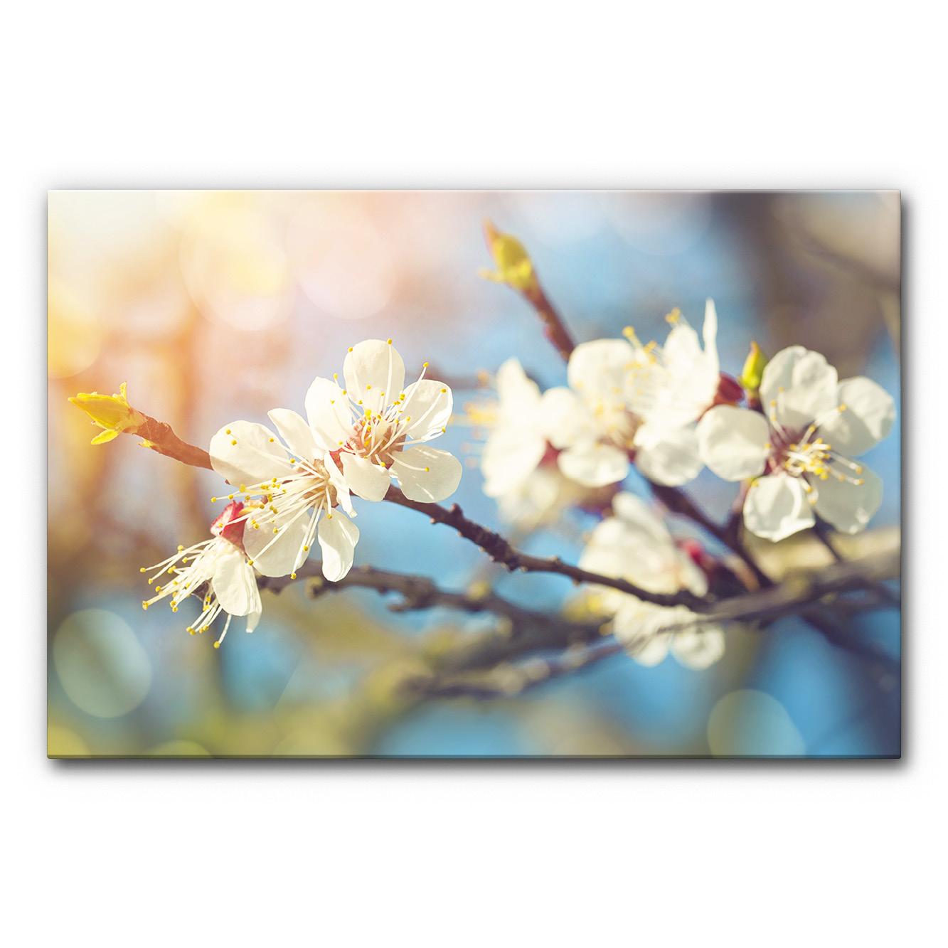 Schallabsorberbild Kirschblüte 1 im Format 120x80 cm
