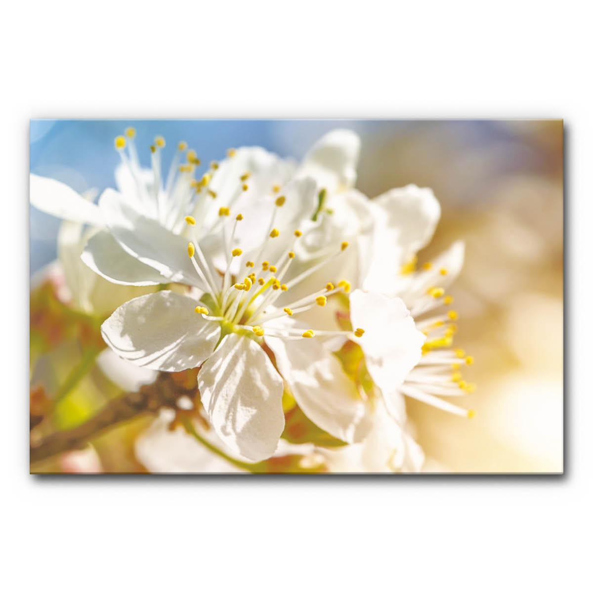Akustikbild Kirschblüte 2 im Format 120x80 cm