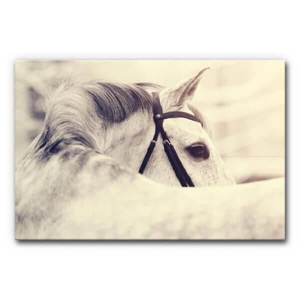 Akustikbild White Horse in Summer im Format A0