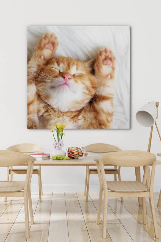 Schallabsorber für die Wand mit Motiv Kleine Katze