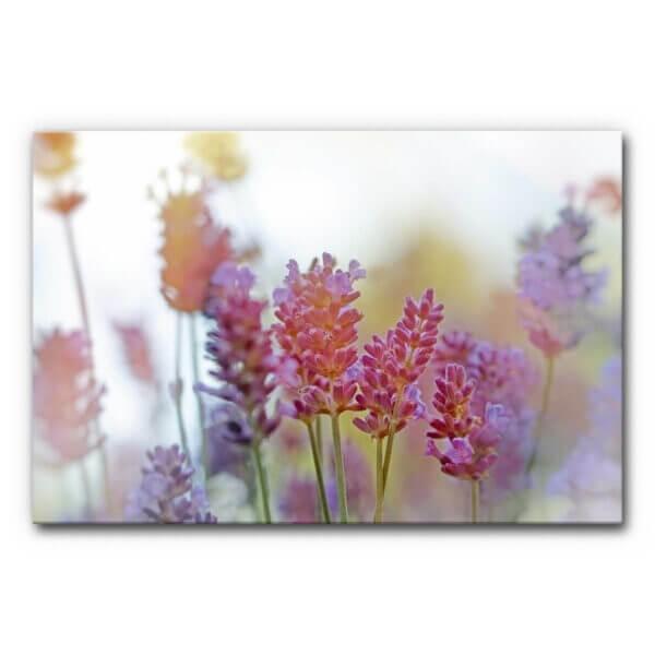 Schallabsorber Akustikbild Lavendel