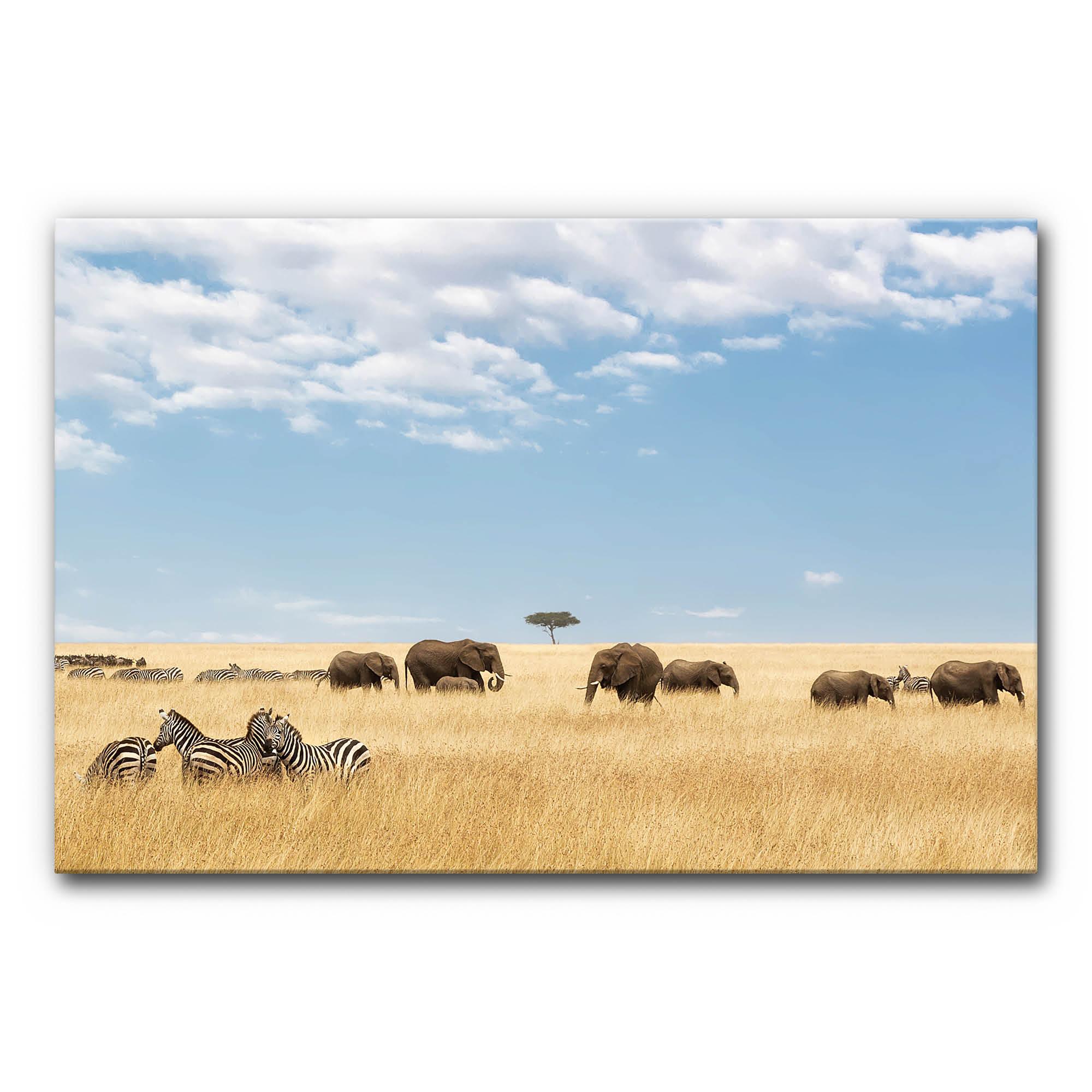 Schallabsorber Akustikbild Zebras und Elefanten im Format 120 x 80 cm