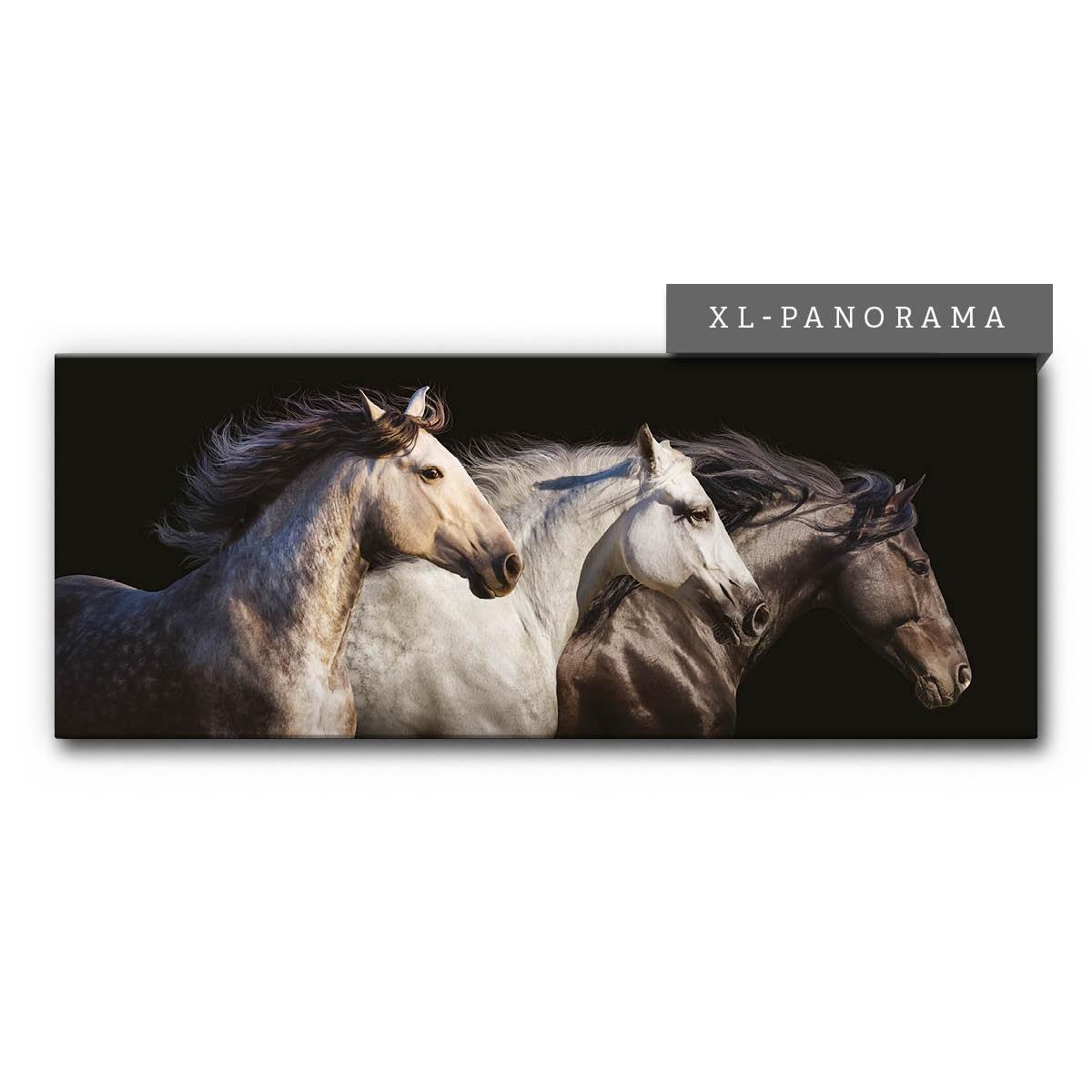 Akustikbild Panorama mit galoppierenden Pferden