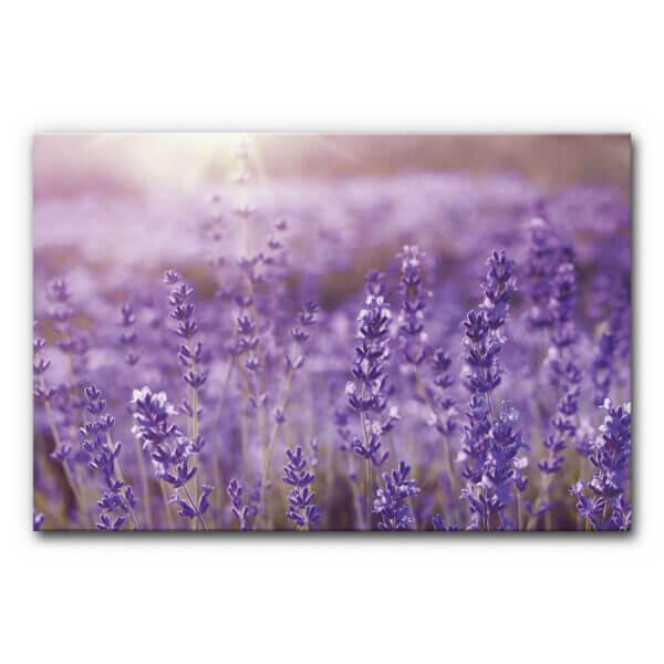 schallabsorbierendes Akustikbild Lavendelfeld im Format DIN A0