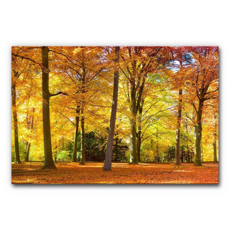 Schallschutz Akustikbild Herbstwald IV im Format 120x80